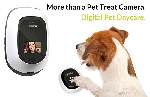 Best pet cameras: Keep tabs on your dog or cat