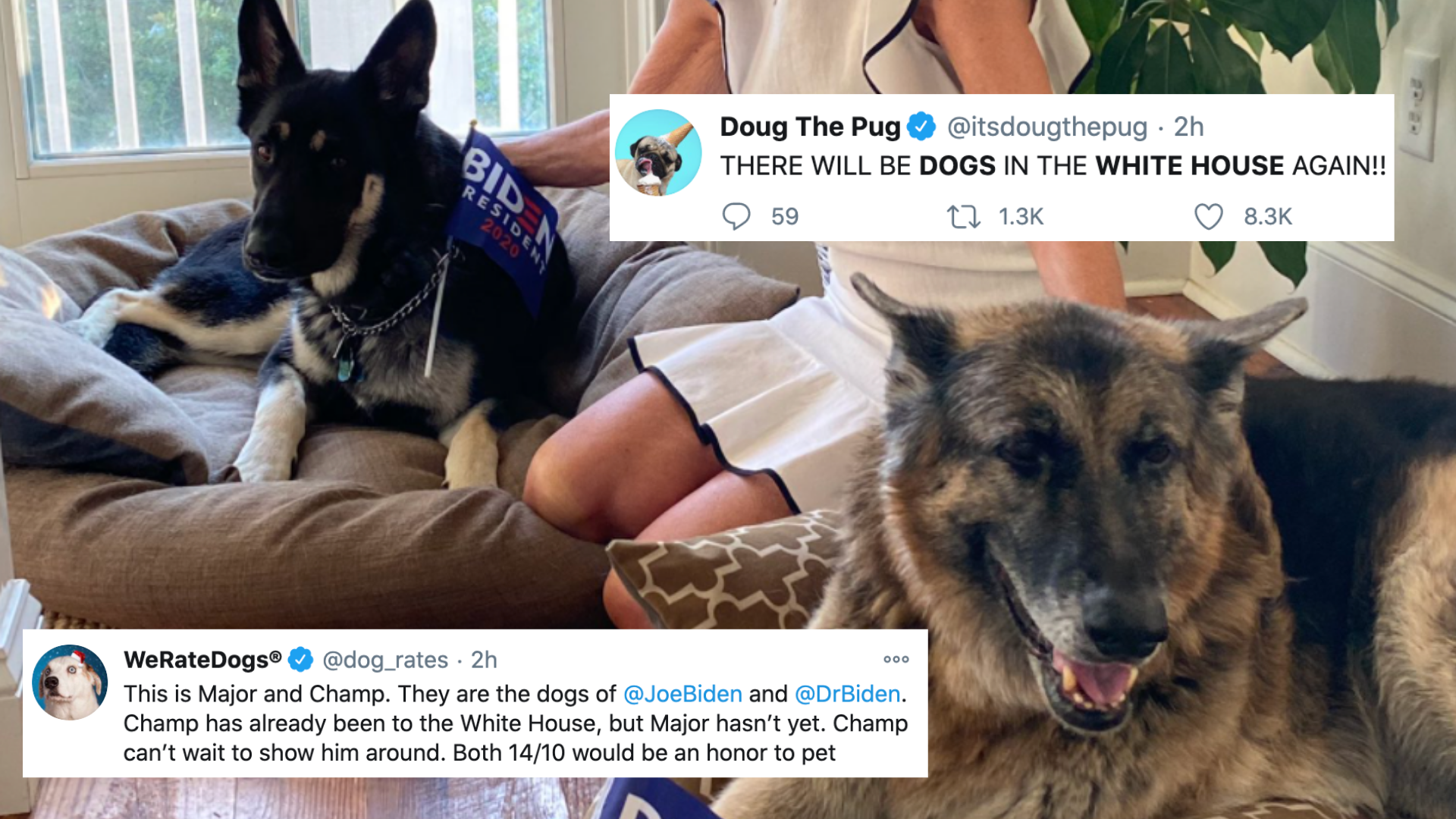 Twitter celebrates dogs coming back to the White House