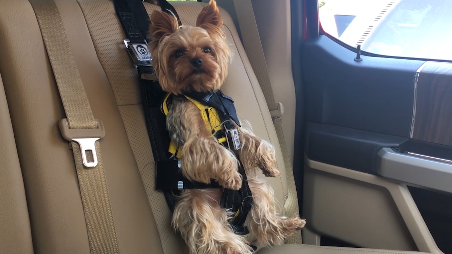 This Doggy Car Seat Will Keep Your Furry Buddy Safe